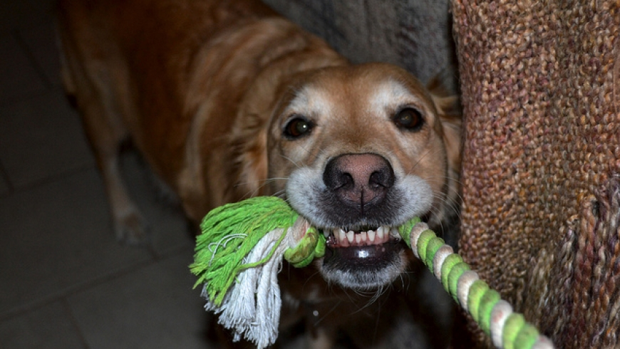 7 mýtov, ktoré kolujú o trénovaní psov